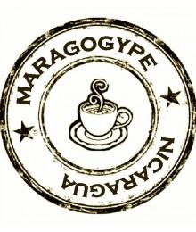 Maragogype - Nicaragua Pur arabica